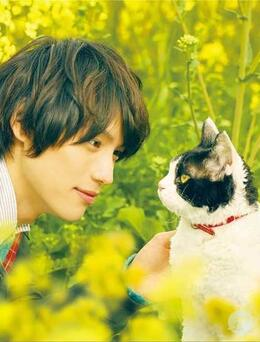 日本帅哥福士苍汰日常逗猫生活照片