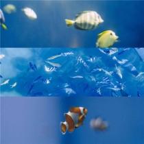 蓝色的海洋以及海洋生物壮阔美丽好看风景图片