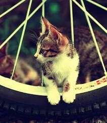 草地上,可爱的萌宠小猫咪幼崽唯美图片