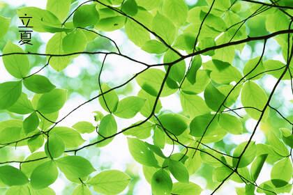 绿意盎然的树木,树叶,叶子等唯美立夏节气桌面壁纸图片