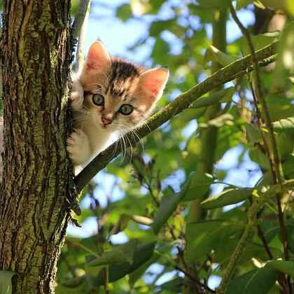 虎斑猫,身有斑纹图案,捕鼠能力强的虎斑猫可爱摄影图片