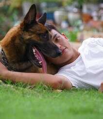 马犬(马里努阿犬),爆发力惊人的马犬高清图片