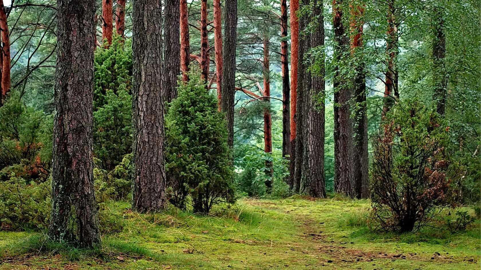 森林 树木,森系桌面壁纸图片
