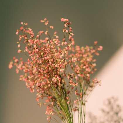 唯美花朵,干花,花束静物背景摄影图片,精致的生活需要花花草草的点缀!