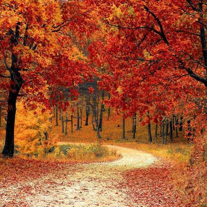唯美树木,行道树,山路,落叶,萧瑟与繁荣交替的森系背景图片