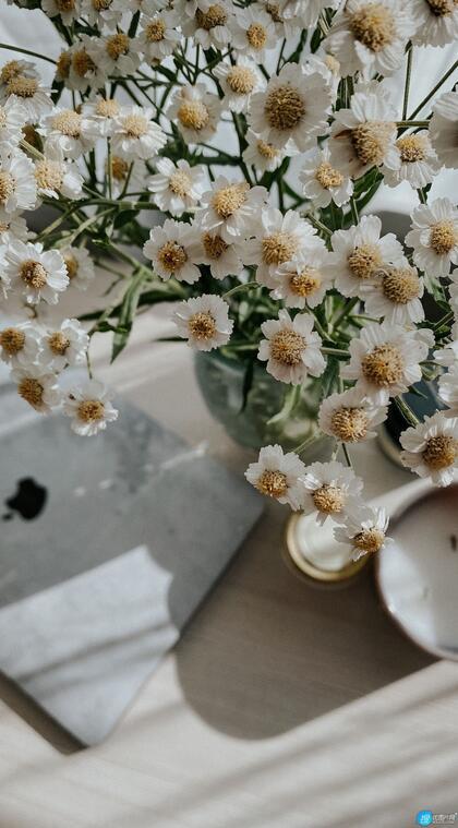 清新小雏菊居家盆栽静物摄影手机壁纸图片
