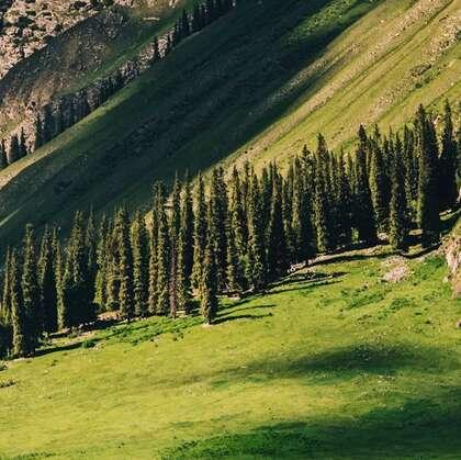 新疆伊犁草原,雪山,树林等唯美风光景色图片