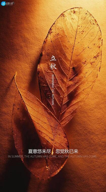 夏意悠未尽,忽觉秋已来!树叶,落叶,枯叶为背景的唯美立秋节气手机壁纸