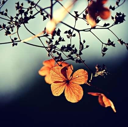 花朵,花瓣,绿叶,唯美小清新花卉意境图片