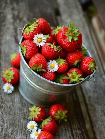 草莓摄影,新鲜采摘下来装在碗里,桶里的草莓静物摄影图片