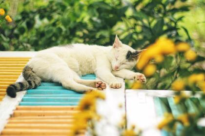 一只在睡觉的可爱猫咪