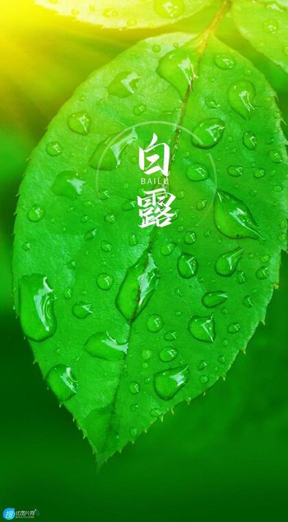 晶莹的露水,露珠,青青的绿叶,白露节气手机壁纸图片
